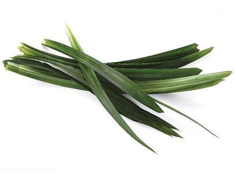 pandan leaf thai ingredients