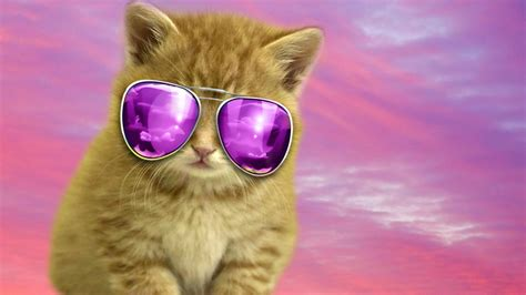 Cool Cat Computer Wallpapers