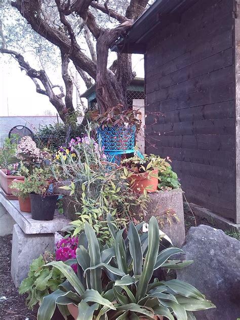 giardino marzo di in giardino a marzo