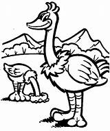 Ostrich Coloring Pages Animals Printable Sheet Animal sketch template