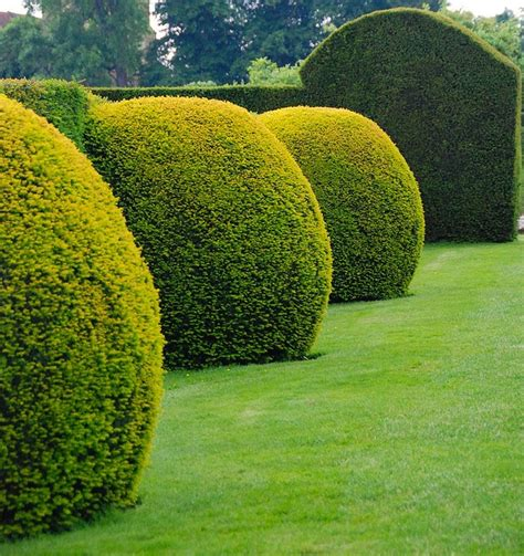 17 Best Images About Topiary On Pinterest