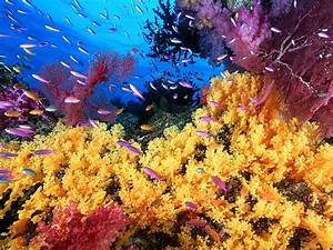 Coral reef life Fish wallpapers - beautiful desktop ...
