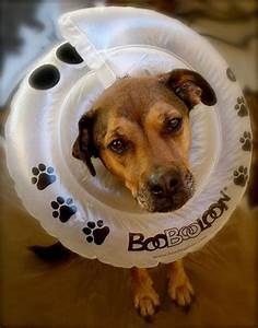 The 25+ best Dog cone ideas on Pinterest | Dog cone collar ...