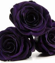 Purple Rose Preserved
