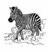 Zebra Coloring Pages Colouring Animal Pattern Printable Zebras Print Getcolorings Coloringpages101 sketch template