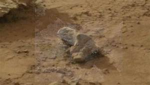 Iguana found on Mars? - check it out - YouTube