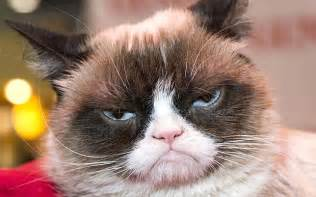 what of cat is grumpy cat grumpy cat free large images