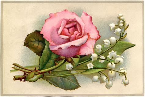 vintage roses  lily   valley image  graphics