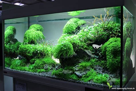 Aquascaping Forum by Pin By A On Projects To Try Saltwater Aquarium