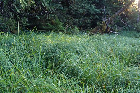 of grass grass at edge of forest