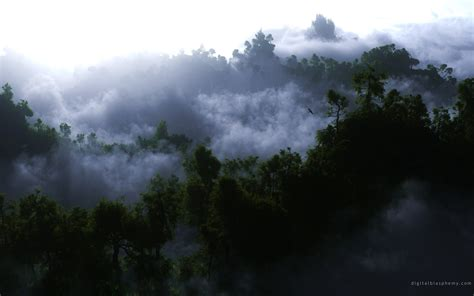 fog  trees wallpapers  images wallpapers