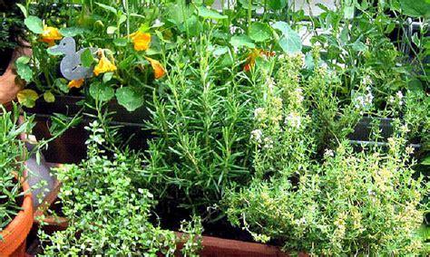 Kräuter Im Garten Anbauen  Kräuter Und Kräuter Rezepte