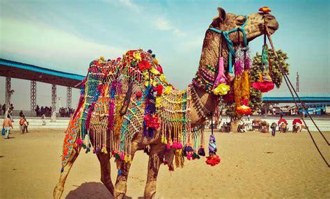 Pushkar Camel Festival Background festivals in rajasthan cultural festivals of