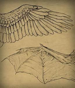 Taking Flight  A Beginner U2019s Guide Into Drawing Wings