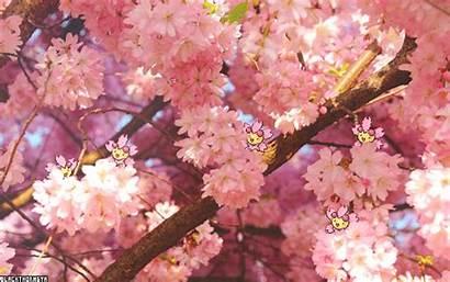 Cherrim Cherry Blossoms Cherubi Moving Pokemon Huh