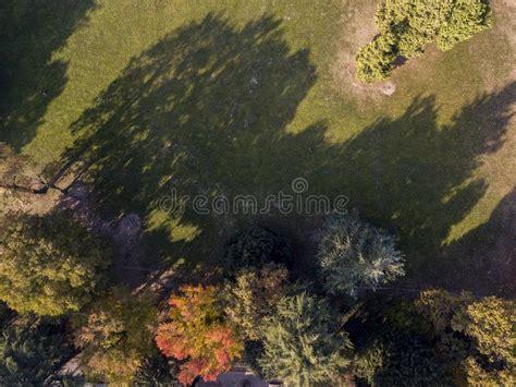 natura e paesaggio vista aerea di un parco di un fogliame di autunno degli alberi frondosi e