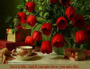 50 Best Rose Quotes To Show Your Love  U2013 The Wow Style