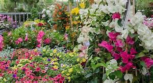 Bäume Und Sträucher Für Den Garten : gartenpflanzen beetblumen b ume f r den garten graz ~ Michelbontemps.com Haus und Dekorationen