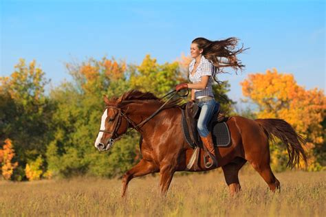 places to go horseback top 4 places to go horseback riding in pigeon forge pigeon forge online