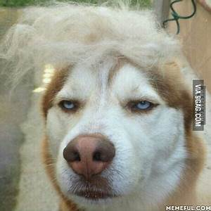 I present you: Annoyed Dog Meme - 9GAG