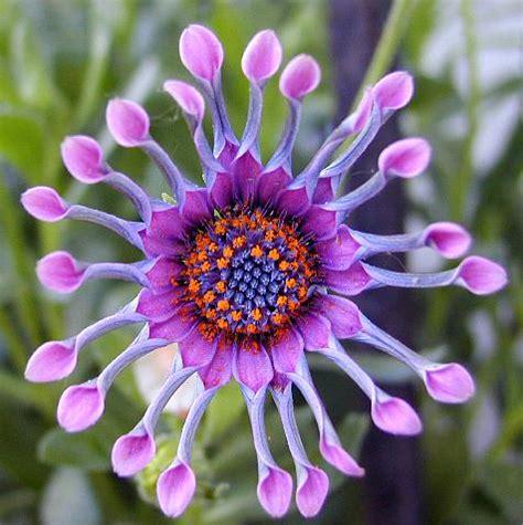 twinkledreams rare flowers