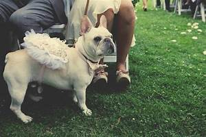 the best dogs in weddings ever