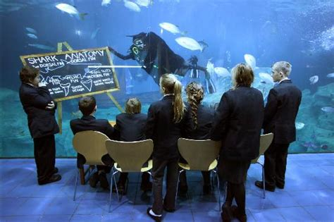 National Marine Aquarium (plymouth)