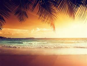 tropical sunset paradise beach coast sea ocean palm summer ...