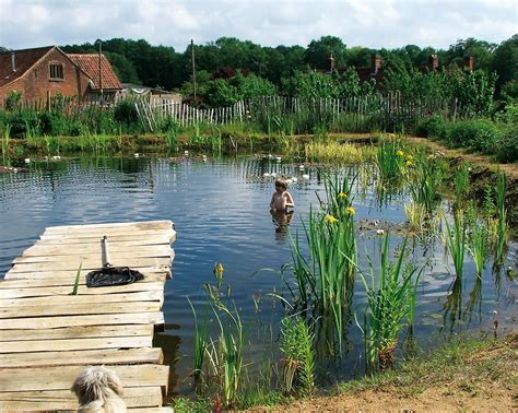 Swimming Pond : The Ecological And Health Benefits Of Natural Swimming
