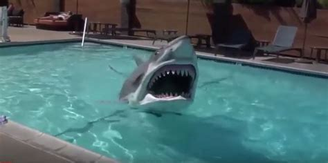 Move Over Bruce, You've Got Competition Swimming Shark