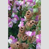 Garden Flowers:...