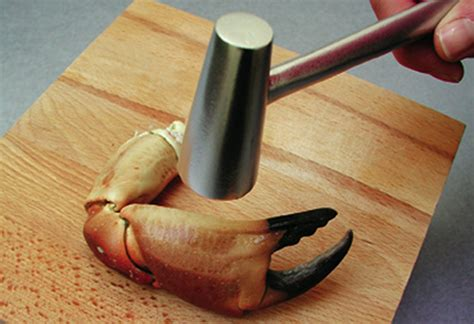 marteau cuisine marteau de cuisine on behance