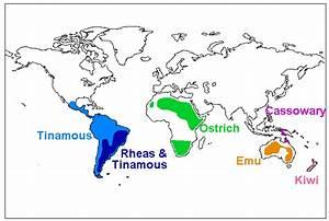 Ratite Bird Distribution