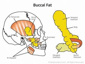 Pin On Buccal Fat Pad Removal