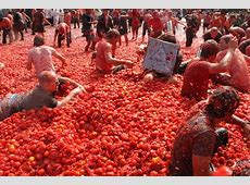 La Tomatina World's Biggest Food Fight SuiteLife