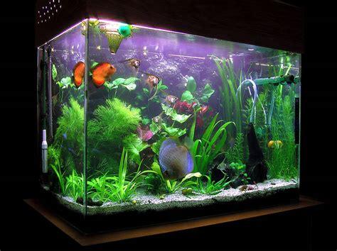 fish tanks plants