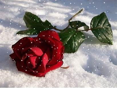Gifmaniacos Nieve Flores