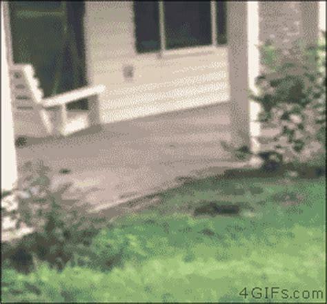 Husky puppy falls into hole
