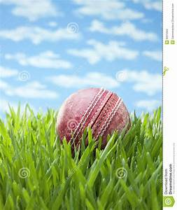 Sports Cricket Ball Grass Background Stock Photography ...