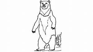 Polar Bear Standing Up Drawing
