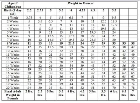 chihuahua growth chart weight  size calculations