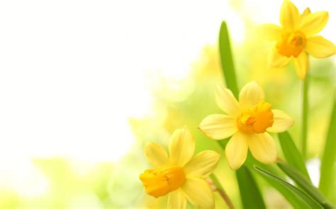 Flower Wallpaper Yellow #13569 Image Pictures Free
