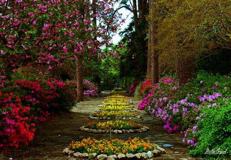 flower garden hd wallpaper background image