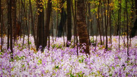 Springequinox Bing Wallpaper Download