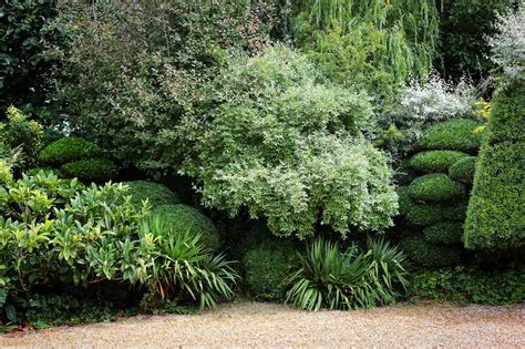 jake hobson japanese cloud pruning specialist topiary