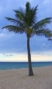 Free the Palm Trees= Free Clipart Images of Palm Trees