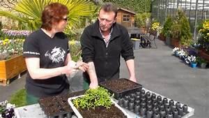 Quand Planter Le Muguet : quand planter des oeillets d inde photo de fleur une ~ Melissatoandfro.com Idées de Décoration