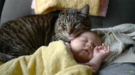 Having A Cat Protects Babies From Getting Asthma, Study Finds