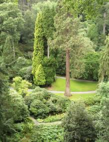 Types of Evergreen Trees Landscaping