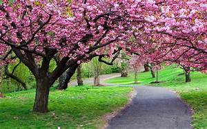 Ppark, Green, Grass, Blooming, Trees, Pink, Flowers, From
